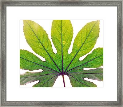 Close Up Of Leaf Vein Framed Print by Panoramic Images