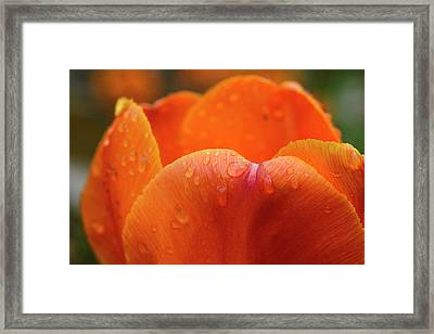 Close-up Of Rain Droplets On Orange Framed Print by Matt Freedman