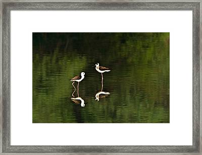 Close-up Of Two Black-winged Stilts Framed Print by Panoramic Images