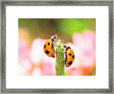 Close Up Of Two Ladybugs Framed Print by Panoramic Images