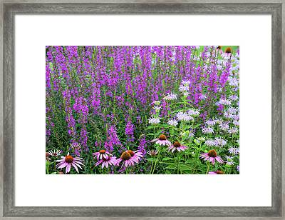 Close-up Of Various Flowers Framed Print by Panoramic Images