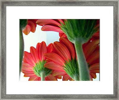 Close View From Under The Red Daisies Framed Print by Danielle  Parent