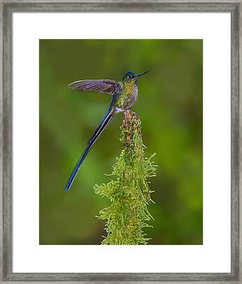 Cloud Forest Fairy Framed Print by Tony Beck