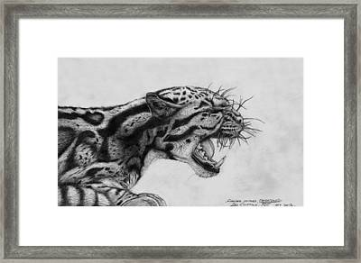 Clouded Leopard Theatened. Framed Print by Ian Cuming