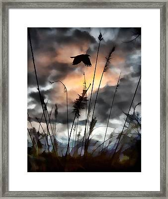 Clouds Framed Print by Gothicolors Donna