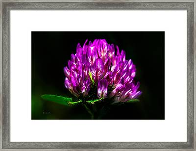 Clover Flower Framed Print by Bob Orsillo