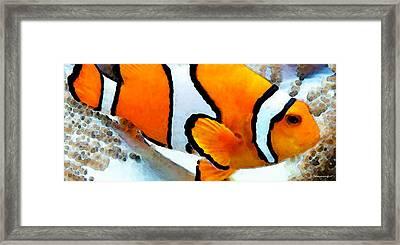 Clown Fish - Clownfish - Tropical Fish Framed Print by Sharon Cummings