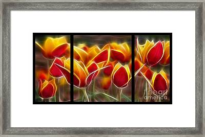 Cluisiana Tulips Triptych  Framed Print by Peter Piatt