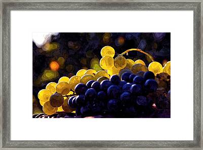 Clusters Of Black And Green Grapes  Framed Print by Lanjee Chee