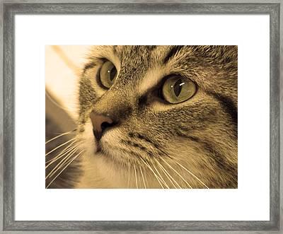 Clyde Framed Print by Jennifer  King