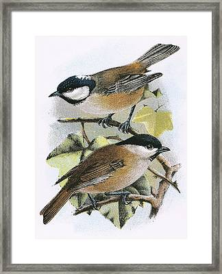 Coal Tit And Marsh Tit Framed Print by English School