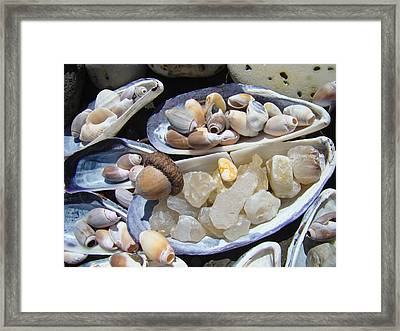 Coastal Beach Art Prints Agates Shells Acorn Framed Print by Baslee Troutman