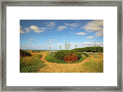 Coastal Plants Framed Print by Luis Argerich