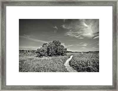 Coastal Prairy Bw Framed Print by Rudy Umans