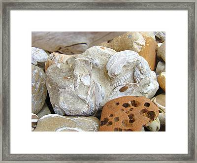 Coastal Shell Fossil Art Prints Rocks Beach Framed Print by Baslee Troutman
