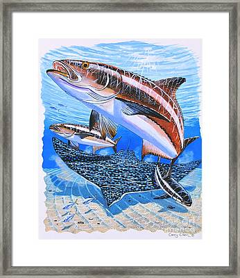 Cobia On Rays Framed Print by Carey Chen