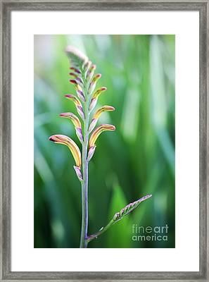 Cobra Lily Framed Print by Neil Overy