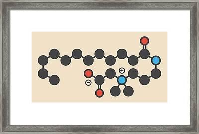 Cocamidopropyl Betaine Molecule Framed Print by Molekuul