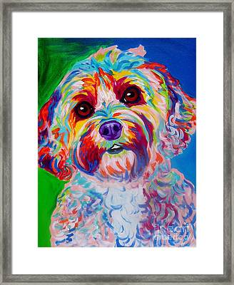 Cockapoo - Carmie Framed Print by Alicia VanNoy Call