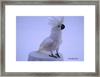 Cockatoo Excited Framed Print by Wendy Fox