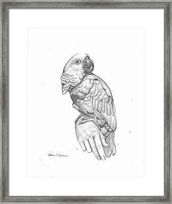 Cockatoo Loves Framed Print by Rebecca Christine Cardenas