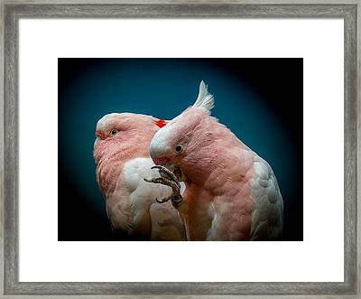 Cockatoos Framed Print by Ernie Echols