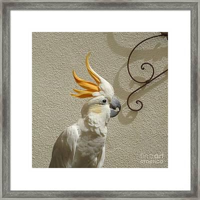 Cocky Too Framed Print by Barbie Corbett-Newmin