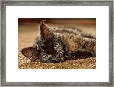 Coco Kitten Framed Print by Trever Miller
