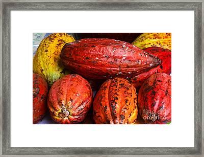 Cocoa Pods Framed Print by Pravine Chester
