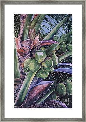 Coconuts   14x26 Framed Print by John Clark