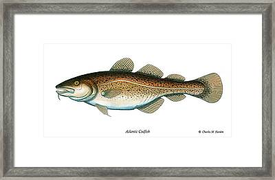 Codfish Framed Print by Charles Harden