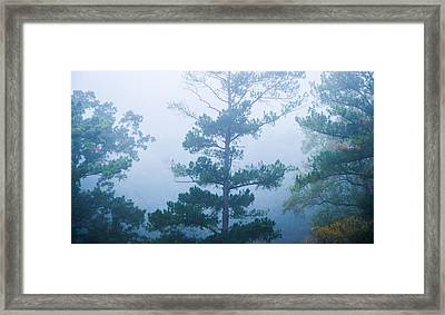 Cold And Mysterious Framed Print by Shelby  Young
