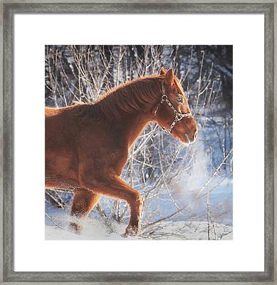 Cold Framed Print by Carrie Ann Grippo-Pike