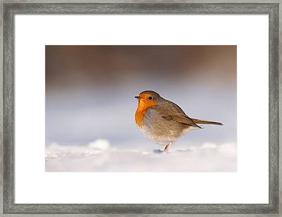 Cold Fee Warm Light Robin In The Snow Framed Print by Roeselien Raimond