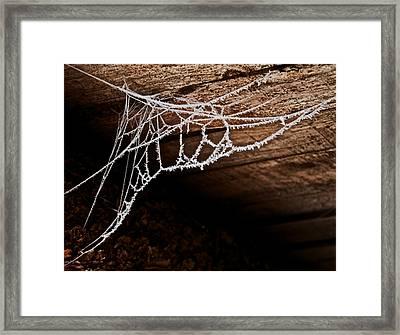 Cold Web Framed Print by Odd Jeppesen