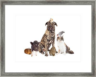 Collage Of Household Pets Framed Print by Susan Schmitz