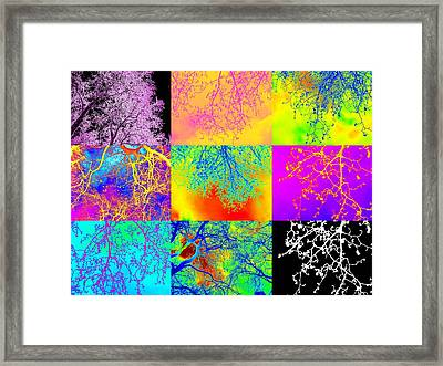 Collage Of Trees Framed Print by Cathy Jacobs