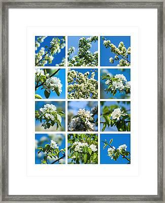 Collage Spring Blossoms 1 Framed Print by Alexander Senin