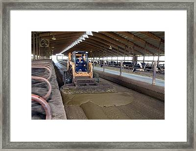 Collecting Cow Dung Framed Print by Jim West