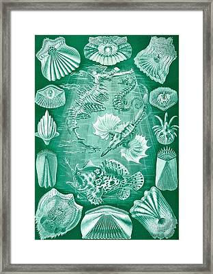 Collection Of Teleostei Framed Print by Ernst Haeckel