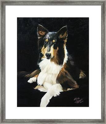 Collie Framed Print by Alice Leggett