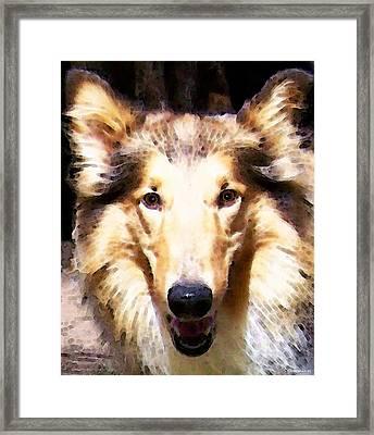 Collie Dog Art - Sunshine Framed Print by Sharon Cummings