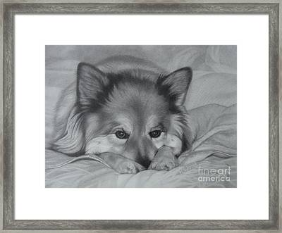 Colonel Tasmanian Devil Framed Print by Karen Wood