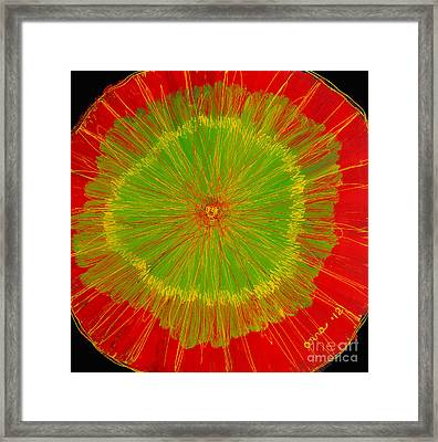 Color Burst 2 Framed Print by Anna Skaradzinska