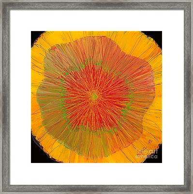 Color Burst 4 Framed Print by Anna Skaradzinska