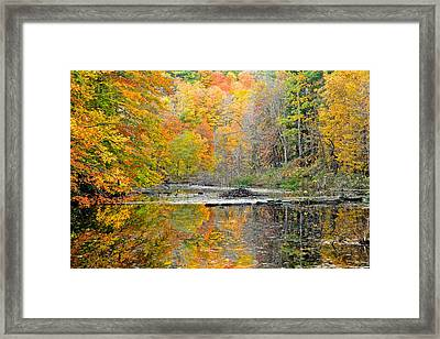 Color Collage Framed Print by Frozen in Time Fine Art Photography