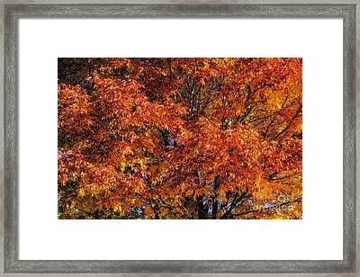 Color Explosion Framed Print by Nancy Marie Ricketts