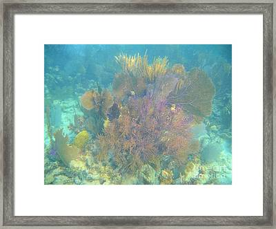 Color In The Keys Framed Print by Adam Jewell
