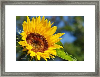 Color Me Happy Sunflower Framed Print by Christina Rollo