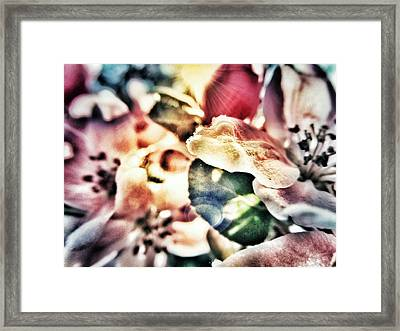 Color Me Pretty... Framed Print by Marianna Mills